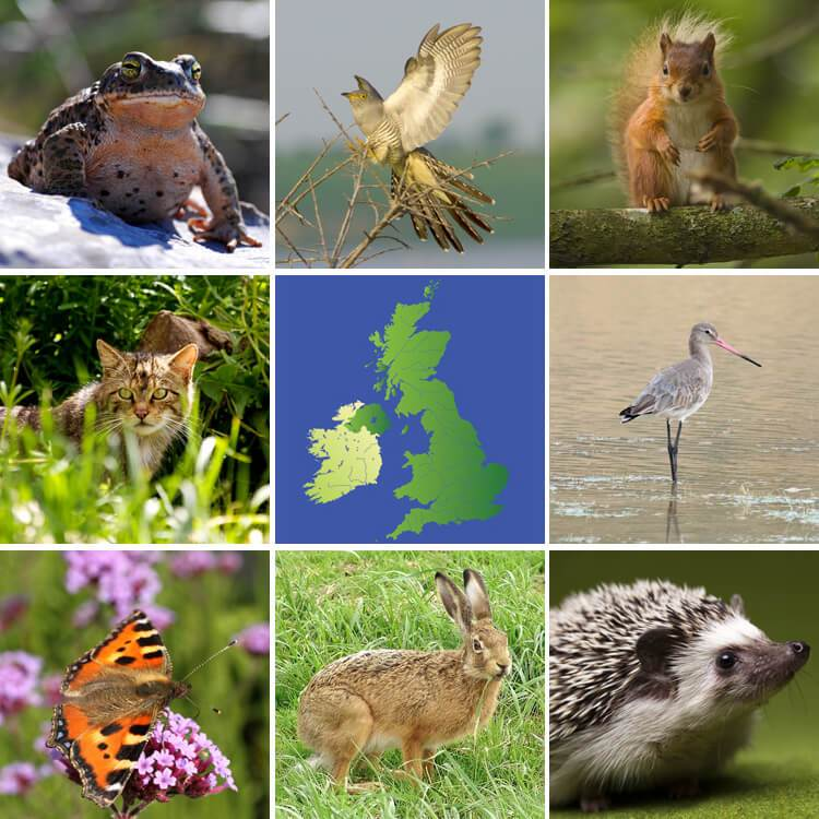 animal extinction among endangered species Chapter 1 source for information on extinction and endangered species:  of listed species occur among  numerous animal species to extinction,.