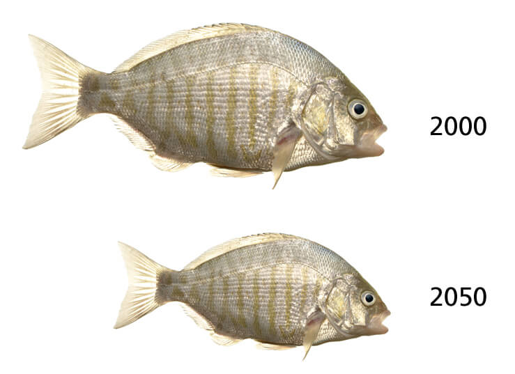 fish body size decline 2050 global warming climate change