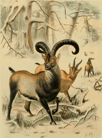 2000 ibex extinct