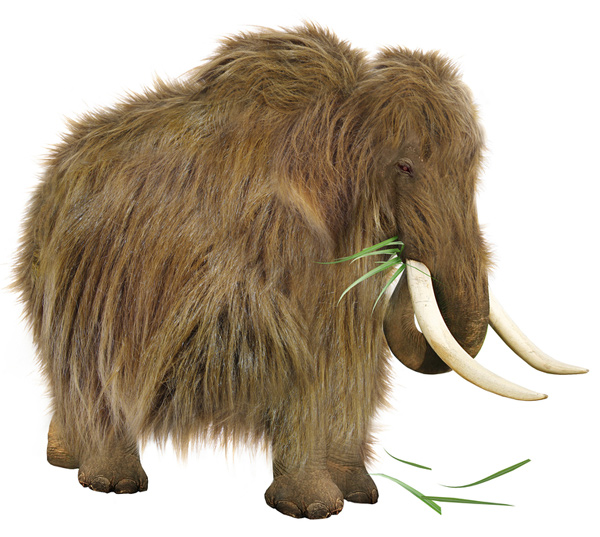 woolly mammoth resurrection cloning 2015