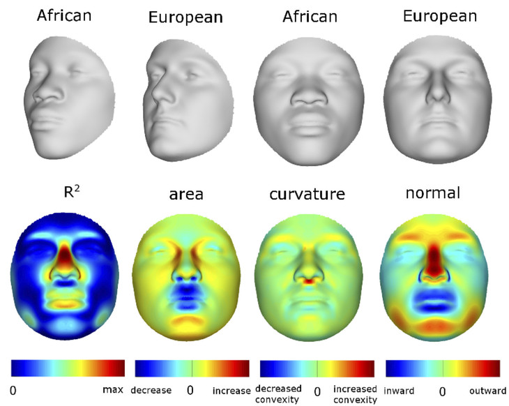Brazilian people physical features