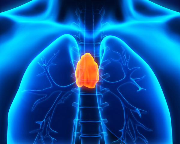 thymus in human
