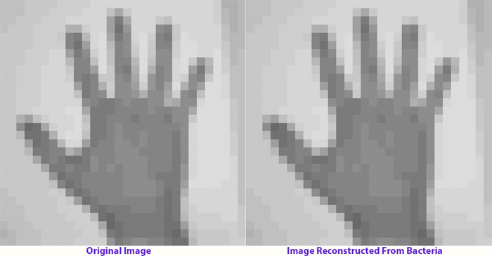 dna hand image