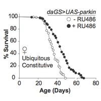 aging fruit flies lifespan increased