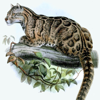 extinct animal