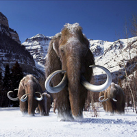 woolly mammoth dna genome