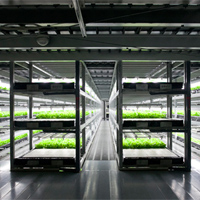 japan automated lettuce factory